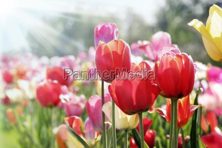 spring sun