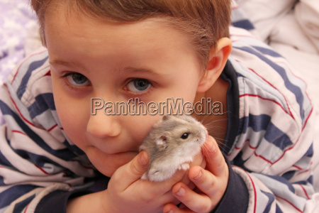 my, hamster - 4520239