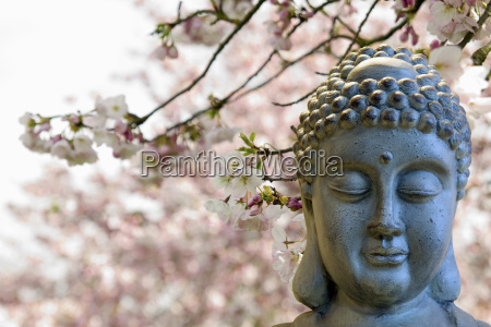 zen buddha meditating under cherry blossom