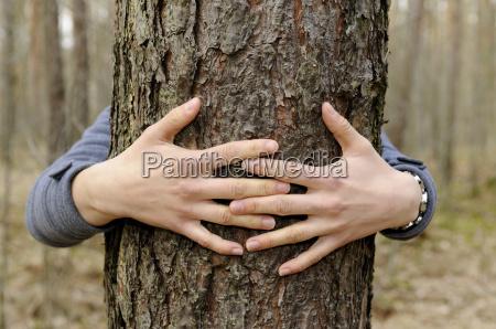 reka rece dlonie dlonie drzewo trunk