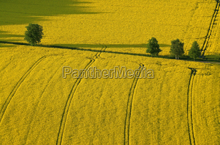yellow country