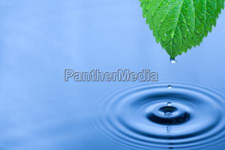 green leaf water drops