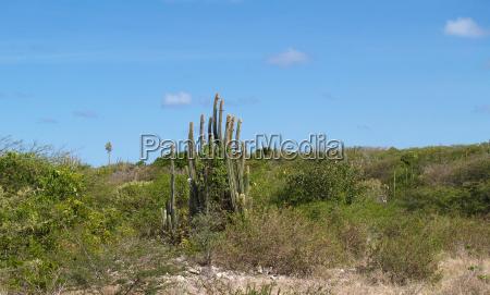 view of cactus near devils bridge