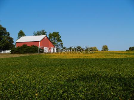 ripening soybean field in front of