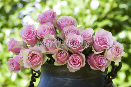 beautiful roses in an antique vase