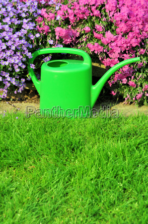 watering the grass