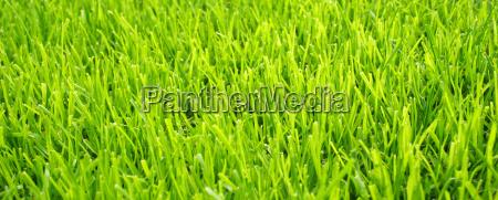 soccer grass football turf texture