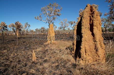 cathedral termite mounds australia