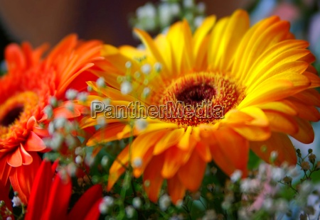 bouquet gerbera as a birthday greeting