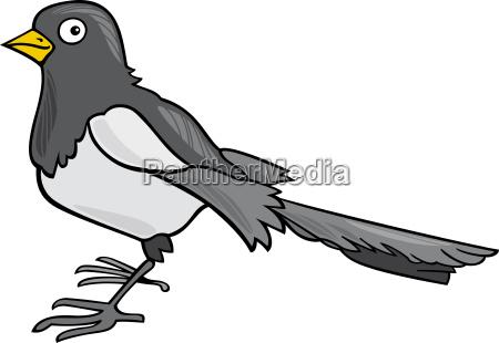 cartoon magpie