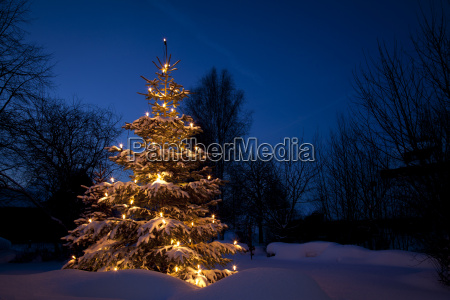 christmas tree in snow winter