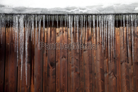icicles in winter
