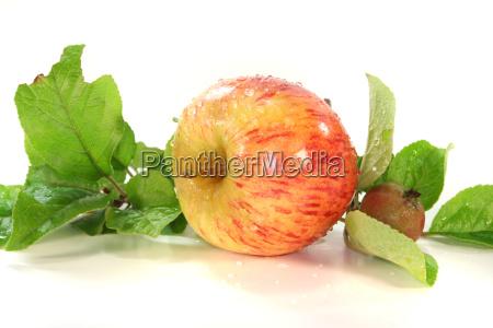 apple tree fruit apples apple flavour