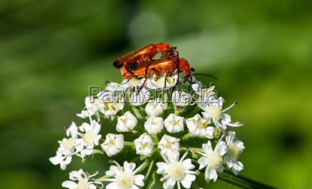 insects love