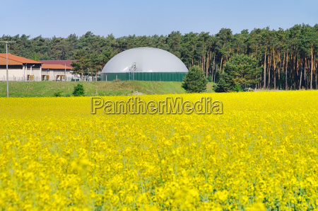 biogas plant rape field biogas