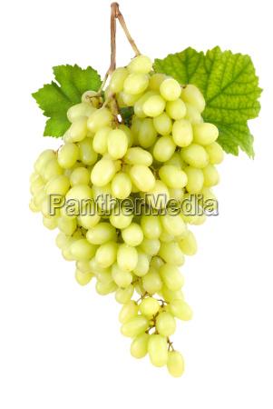 seedless sweet grapes on white