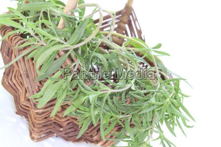 spice blank european caucasian culinary herbs