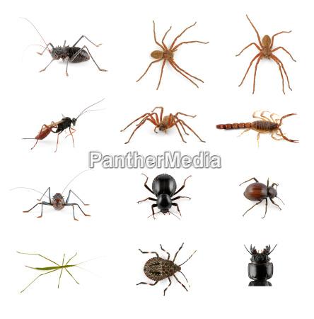 invertebrate collection