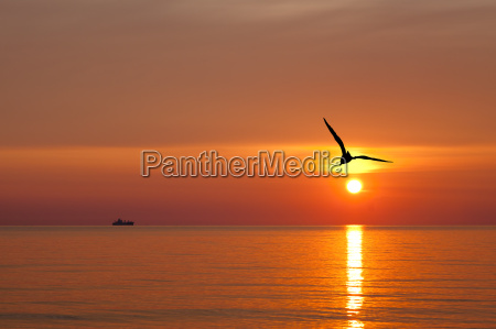 gull in front of a rising
