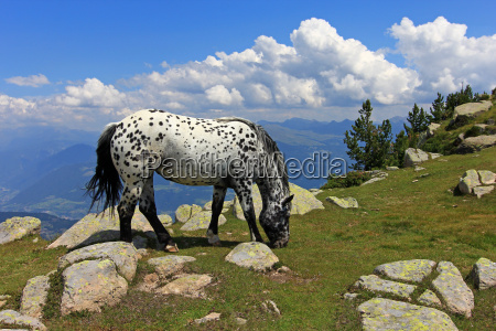mountains horse alps south tyrol sight