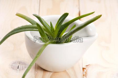 aloe vera herbal medicine