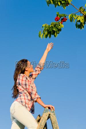 cherry tree woman reaching high branch