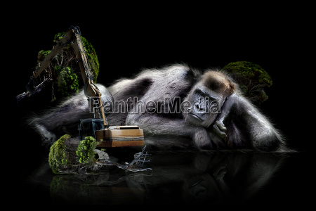 gorilla conservation