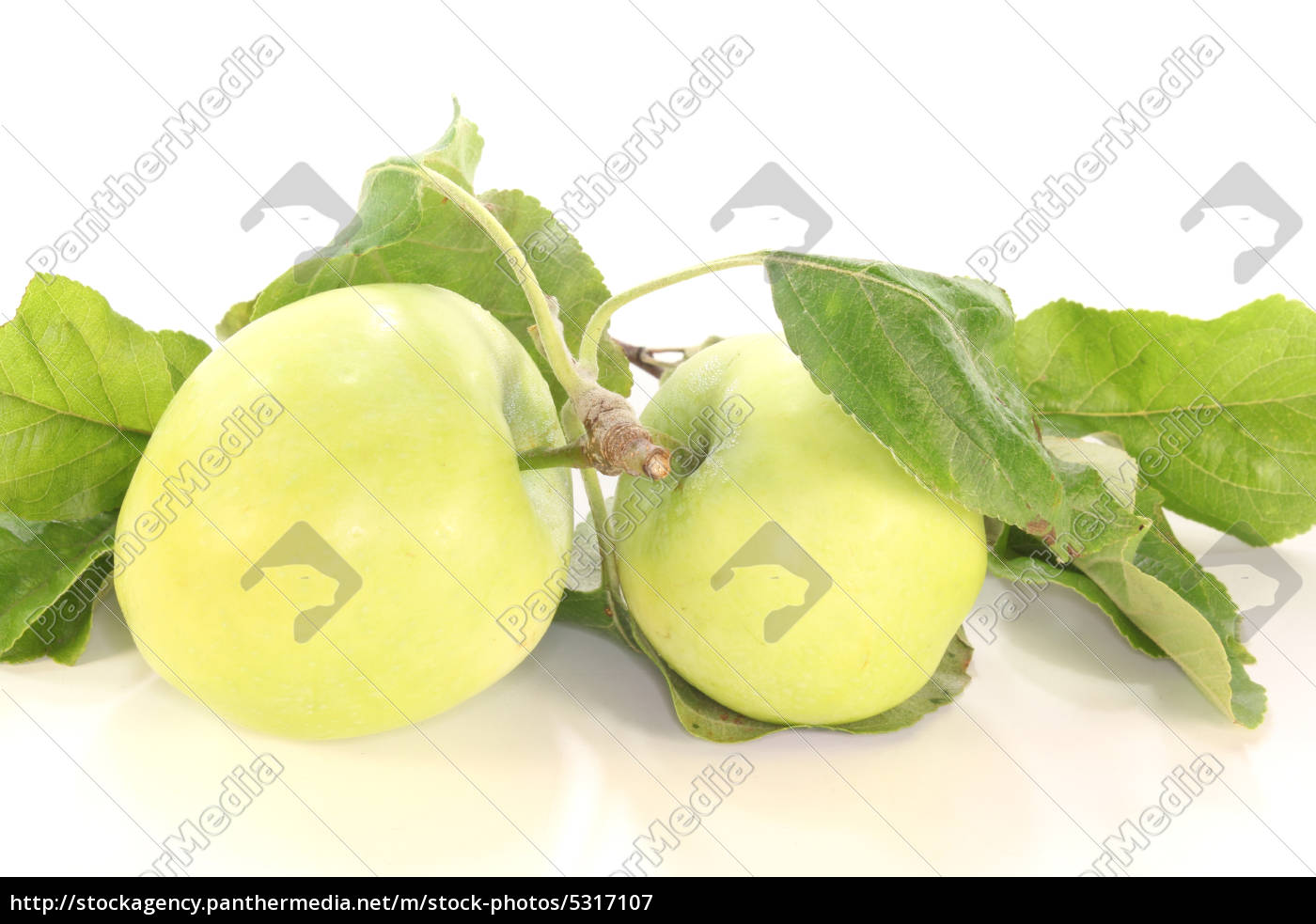 apples, and, leaves - 5317107