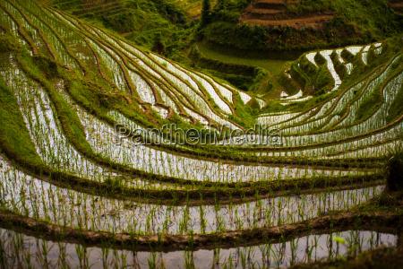 steep flooded rice terraces at longji