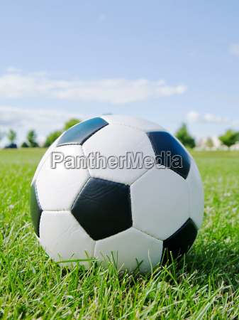 soccer ball in the grass against