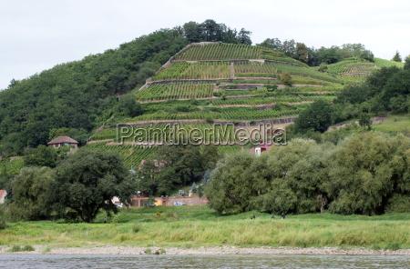 vineyards dig 0122