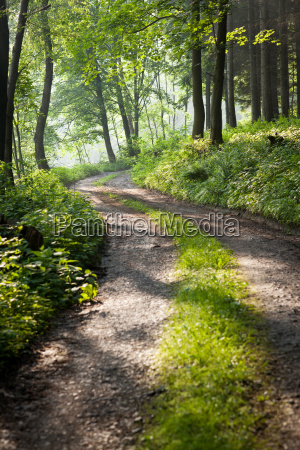 lovely forest path in early morning
