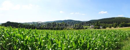 corn field at idarwald panorama