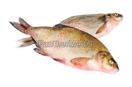two fresh freshwater fish
