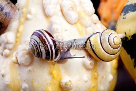 snail and pumpkin