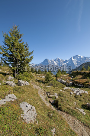 jungfrau massif from the view of