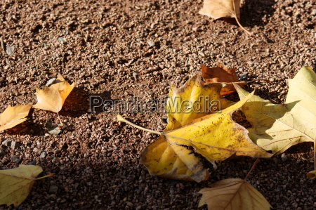 autumn leaves dig 0182