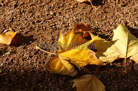 leaves in autumn dig 0183