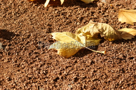 leaf in autumn dig 0184