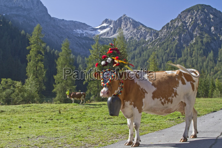cattle drive 2011