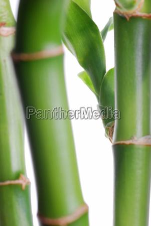 bamboo stem background