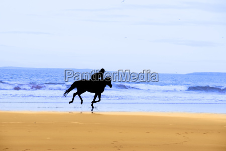 horse and rider silhouette galloping along
