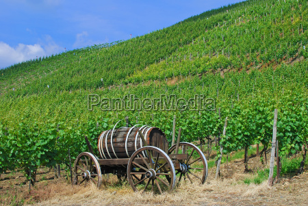 idyll in the vineyards of
