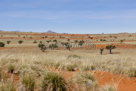 the red dunes of wolwedans