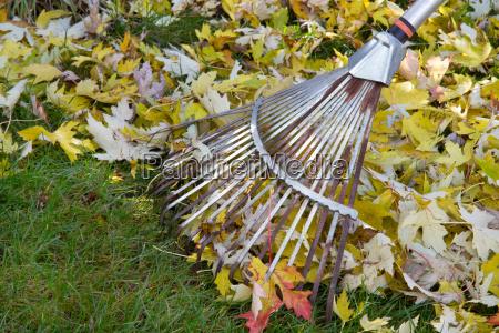 autumn leaves rake in the garden