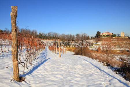 snowy vineyards and rural house in