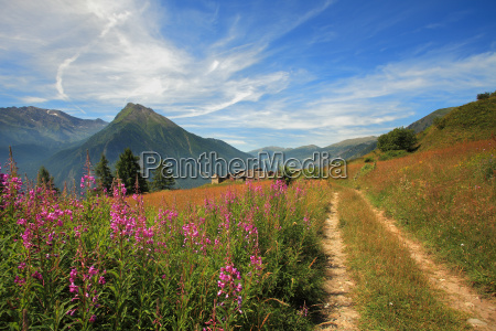 view on beautiful alpine fields and