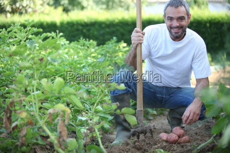 40 years old man harvesting potatoes