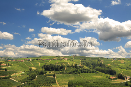 view on green hills with vineyards