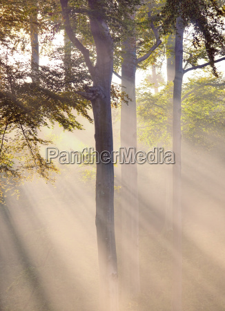 misty atmosphere and sunbeam in the